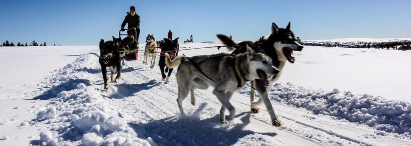 husky sledding in Morzine