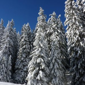 snow covered forest seen whilst snowshoeing along the Dereche in Morzine