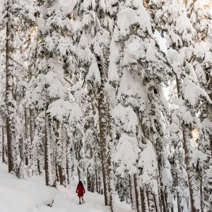 person snowshoeing in Morzine in tall tree forest